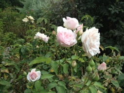 Make Time To 'Stop And Smell The Roses'