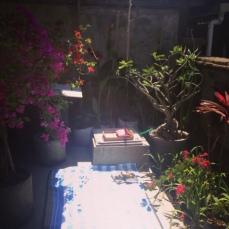 My Dreaming Garden