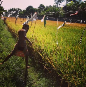 Rice Field Hopping