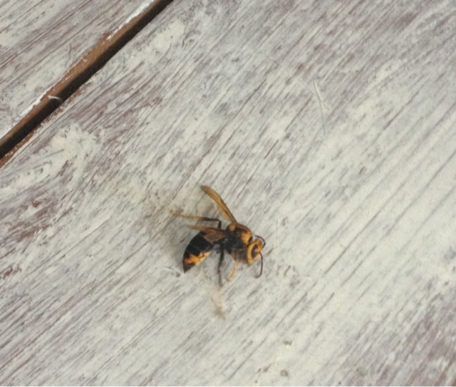 The Dead Wasp