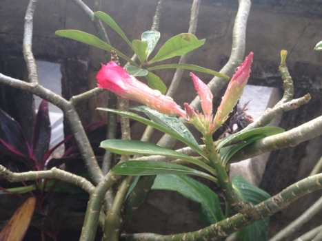 It has buds!!!