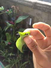 Taking away the caterpillar