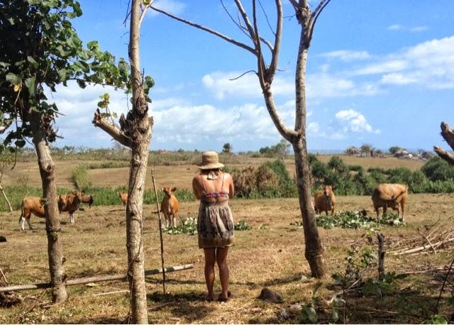 Balinese Countryside