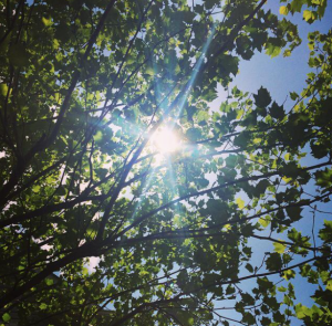 Look for the guiding light among the leaves.