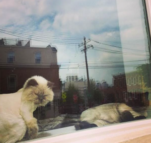My sister's cats and their new haircuts